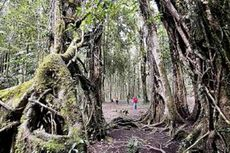 Begonia, Duta Bali untuk Dunia