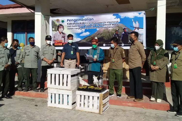 Penyerahanbkakatua koki (cacatua galeritae leonora) dari BBKSDA NTT ke BKSDA Maluku