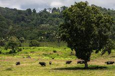 TN Alas Purwo Buka Lagi, Wisatawan Tidak Perlu Rapid Test