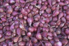 Kementan: Pasca-Lebaran, Produksi Bawang Merah Nasional Melimpah