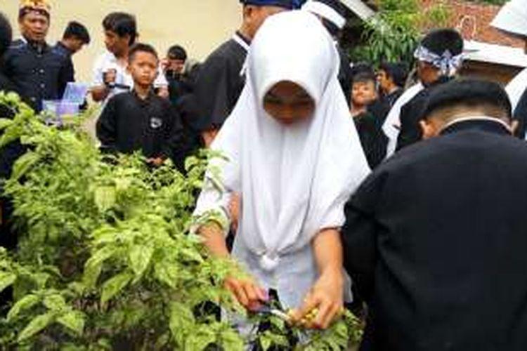 Siswa SDN Ciwangi Purwakarta menanam dan panen bersama pohon cabai rawit. Kegiatan ini merupakan bagian dari pendidikan vokasional yang ada di Purwakarta, Selasa (10/1/2016).