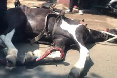 Viral, Video Kuda Penarik Delman Terkapar dan Kejang-kejang di Jalan, Diduga Kelelahan