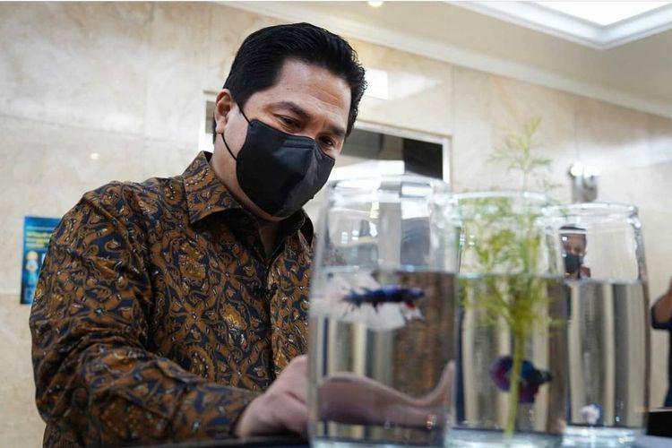 Menteri Badan Usaha Milik Negara (BUMN) Erick Thohir memamerkan sejumlah ikan cupang.