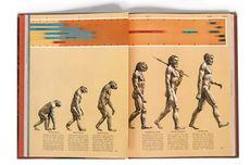 Evolusi: Pengertian dan Perkembangannya