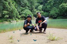 Fenomena Langka, 240 Spesies Kupu-kupu Kumpul di Bantimurung