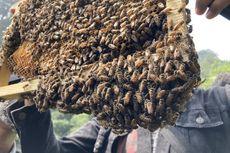 9 Kegiatan Seru di Bojongmurni Bogor, Bisa Panen Lebah Madu