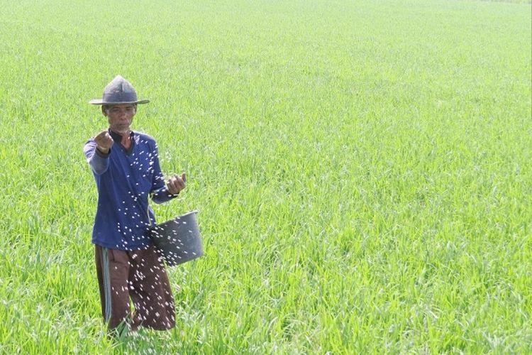 Petani yang berhak menerima pupuk bersubsidi adalah petani yang telah bergabung dalam kelompok tani.