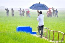 Saat Jokowi Terobos Hujan Seorang Diri Meninjau Sawah di Sumba Tengah