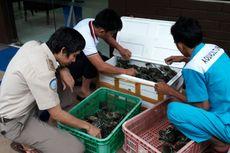 Penyelundupan 3.600 Kepiting Bertelur ke Malaysia Digagalkan