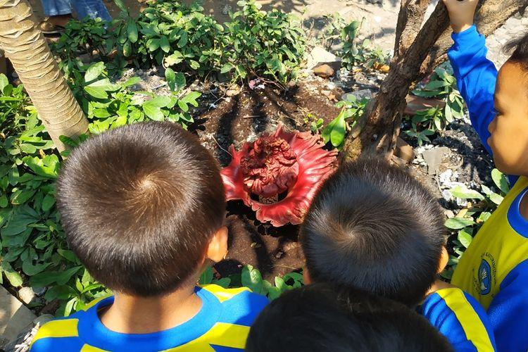 Beberapa murid SDN Kayuringin Jaya II, Bekasi Selatan mengamati tumbuhnya bunga bangkai di halaman sekolah mereka, Jumat (4/10/2019).