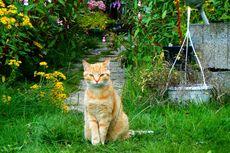 Cara Ini Bisa Mencegah Kucing Buang Kotoran Sembarangan di Halaman