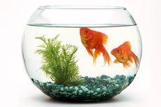 4 Hal yang Perlu Diperhatikan Sebelum Membeli Akuarium