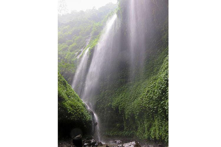 Keindahan Air Terjun Madakaripura bagaikan tirai putih.