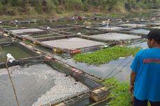 Ratusan Ton Ikan Keramba Jala Apung Mati Mendadak