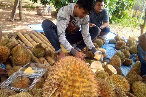 Agrowisata Kebun Durian di Aceh, Makan Monthong di Bawah Pohon