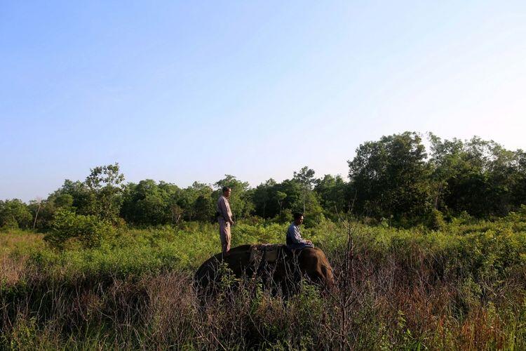 Mahout di Elephant Response Unit melakukan monitoring pergerakan gajah Sumatera (Elephas maximus sumatranus) liar di kawasan Taman Nasional Way Kambas, Lampung Timur, Minggu (30/7/2017). Gajah-gajah jinak milik Elephant Response Unit dilatih untuk digunakan mengatasi konflik gajah liar dengan warga di sekitar kawasan hutan Taman Nasional Way Kambas.