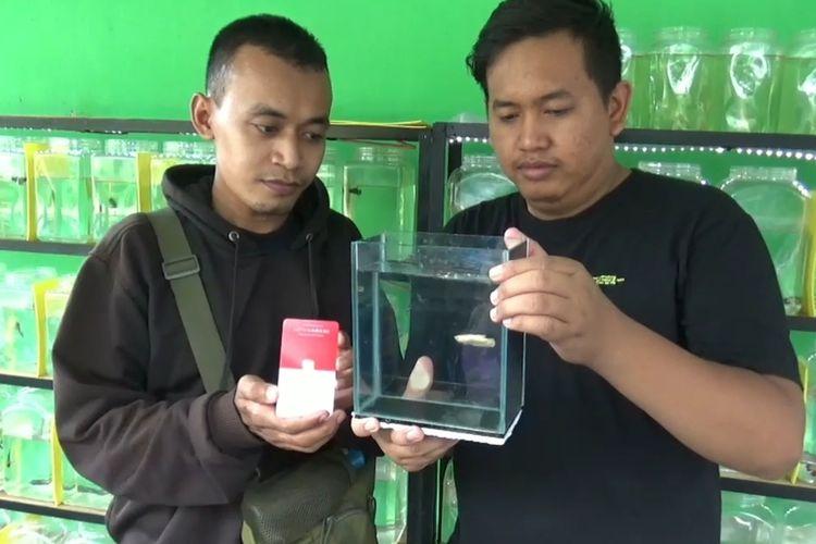 Arief Suma Romadhoni menunjukkan emas batangan satu gram yang akan dibarter dengan ikan cupang super gold milik Arnov Pratikna, warga Jalan Maskumambang, Kelurahan Sogaten, Kecamatan Taman, Kota Madiun.