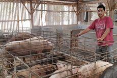 [POPULER NUSANTARA] Berhenti Kuliah Jadi Peternak Babi | Bayi 14 Bulan yang Diberi Kopi Akhirnya Minum Susu