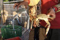 Chef Juna MasterChef Indonesia Bagi Cara Kupas Cangkang Rajungan