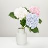 Cara Memotong dan Membuat Bunga Hortensia Awet di Dalam Vas
