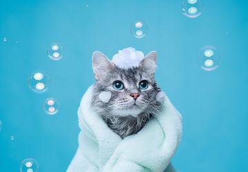 Tips Memandikan Kucing Agar Tidak Dicakar