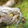 Awas, 6 Jenis Serangga Ini Berbahaya bagi Kucing