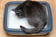 Kenapa Kucing Tidur di Dalam Kotak Pasirnya? Cermati 2 Faktor Ini