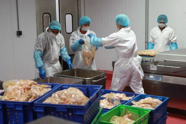 Pekerja di pabrik pengolahan daging di Doha, Qatar