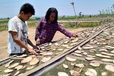 Mengenal Porang, Tanaman yang Bikin Banyak Petani Jadi Miliarder