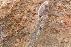 Fosil Hewan di Waduk Saguling Rawan Penjarahan