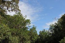 Hutan: Fungsi dan Jenisnya
