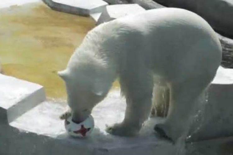 Seekor beruang kutub, Nika, memprediksi Jerman akan menjuarai Piala Konfederasi 2017.