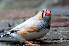 8 Burung Peliharaan Terbaik untuk Kamu yang Sibuk