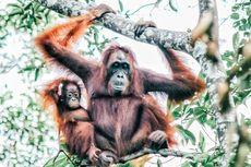 Upaya ANJ Lindungi Keanekaragaman Hayati Indonesia