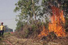 Menhut: Titik Kebakaran Lahan di Riau Berkurang