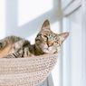 7 Ras Kucing yang Cocok Tinggal di Apartemen