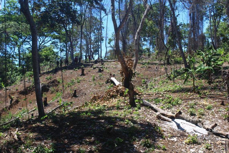 Bekas pembalakan hutan lindung Sendiki di Kabupaten Malang, Minggu (19/1/2020)