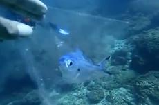 Viral Ikan Terperangkap Kantong Plastik, Begini Kisah di Baliknya