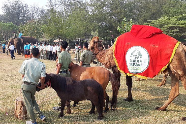 Suasana upacara bendera di Taman Safari Batang Dholpin Center memperingati HUT ke 74 RI di Batang Jawa Tengah.