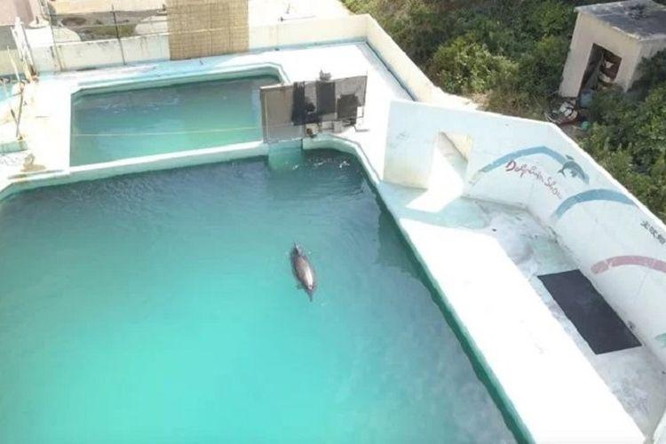 Honey, seekor lumba-lumba hidung botol yang hidup sendirian dalam akuarium yang telah ditinggalkan di Jepang dalam dua tahun terakhir. Honey yang dijuluki lumba-lumba paling kesepian di dunia mati pada Maret lalu.