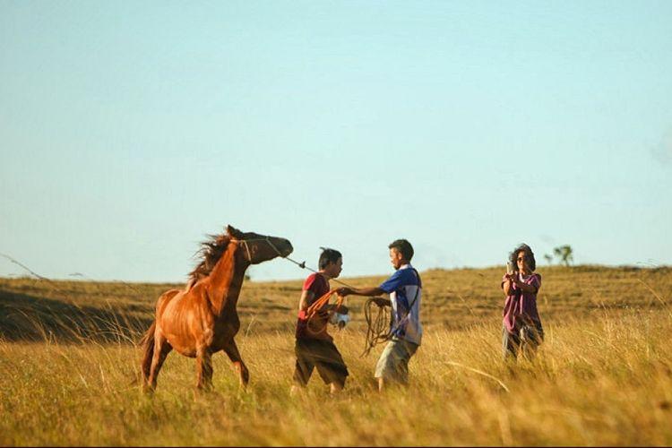 Kuda Sandalwood di Sumba.