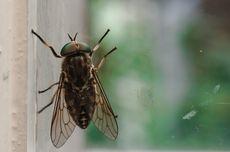 Berniat Singkirkan Lalat, Kakek Ini Justru Ledakkan Bagian Rumahnya