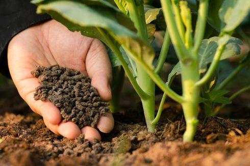 8 Pupuk Organik Terbaik untuk Tanaman, Bisa Dibuat Sendiri di Rumah