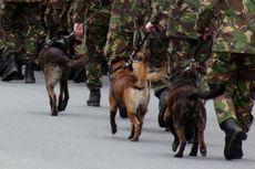 38 Anjing Militer Dieutanasia dalam 6 Bulan, Kemenhan Inggris Dikecam