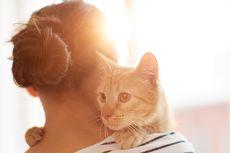 Ini Alasan Jangan Memegang Kucing di Bagian Tengkuk