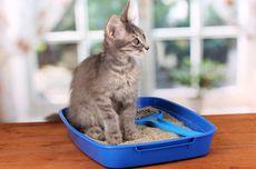 Ini Tempat yang Paling Tepat Meletakkan Kotak Pasir Kucing