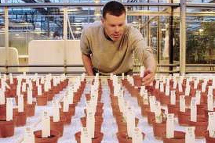 Wieger Wamelink mengamati tanaman pangan yang ditumbuhkan di lingkungan serupa Mars.
