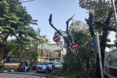 Pohon Tumbang di Jalan Hang Tuah Kebayoran, Timpa Rambu Lalu Lintas dan Pagar Rumah