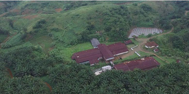 Pabrik Cipetir pada Februari 2020. Tanaman sawit mendominasi lingkungan sekitar pabrik.