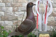 Laku Miliaran Rupiah, Sejak Kapan Burung Merpati Diminati Penghobi?
